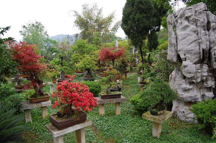 Best Bonsai gardens in Guizhui